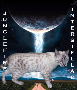 Junglefire Interstellar